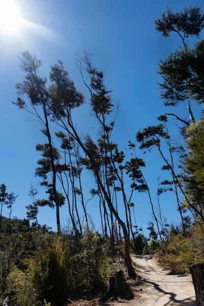 Tall dark trees rise in the bright sunshine