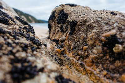 A close up of barnacles on a gnarly rock