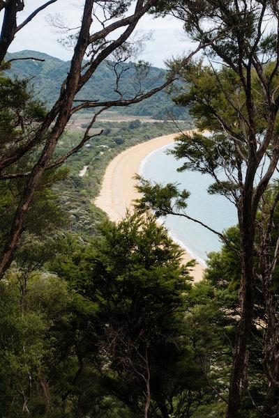 A high up view of Totaranui beach through some trees