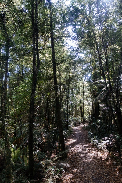 The start of the Heaphy Track, a path through a beech forest