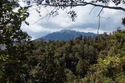 A view through the trees to a mountain