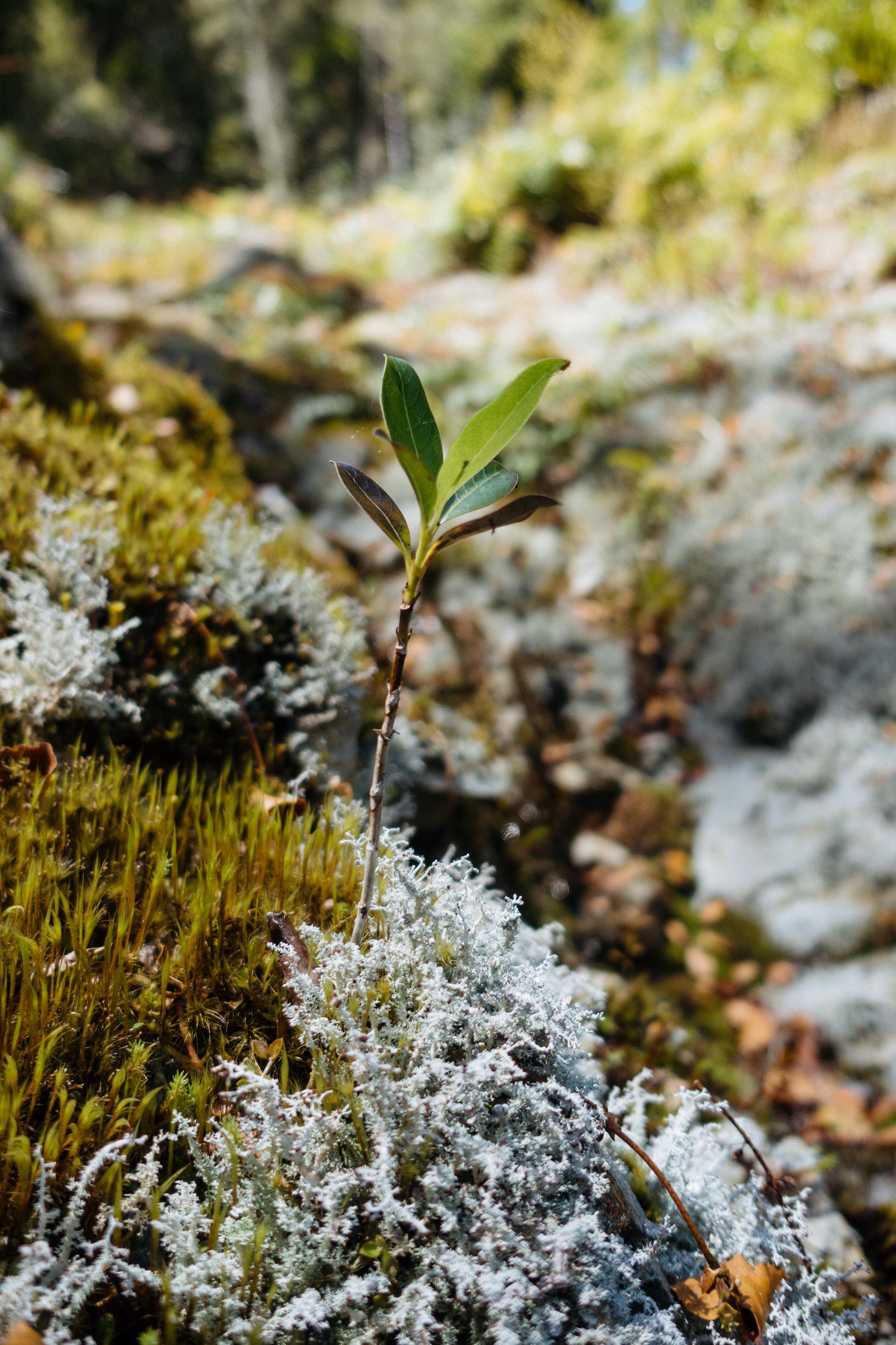 Leaves poking through moss