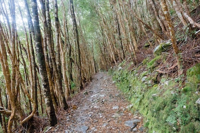 The path through the beech forest