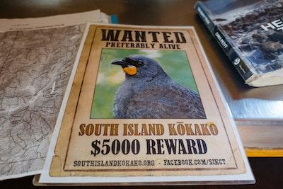 Poster advertising a reward for sightings of the South Island Kokako