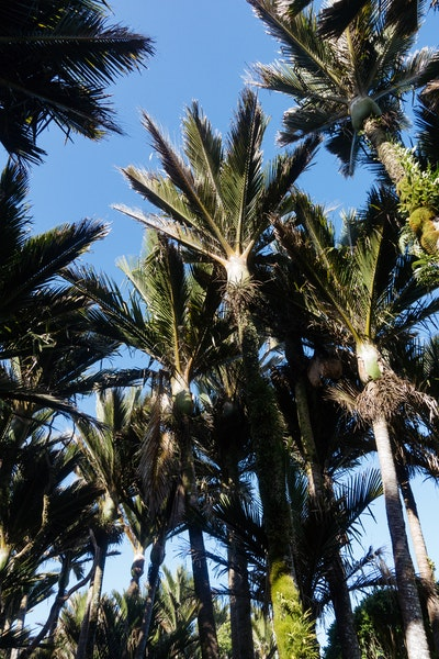 A collection of palms