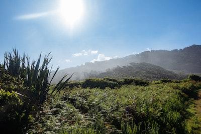 Mist rises over a bush-covered hillside