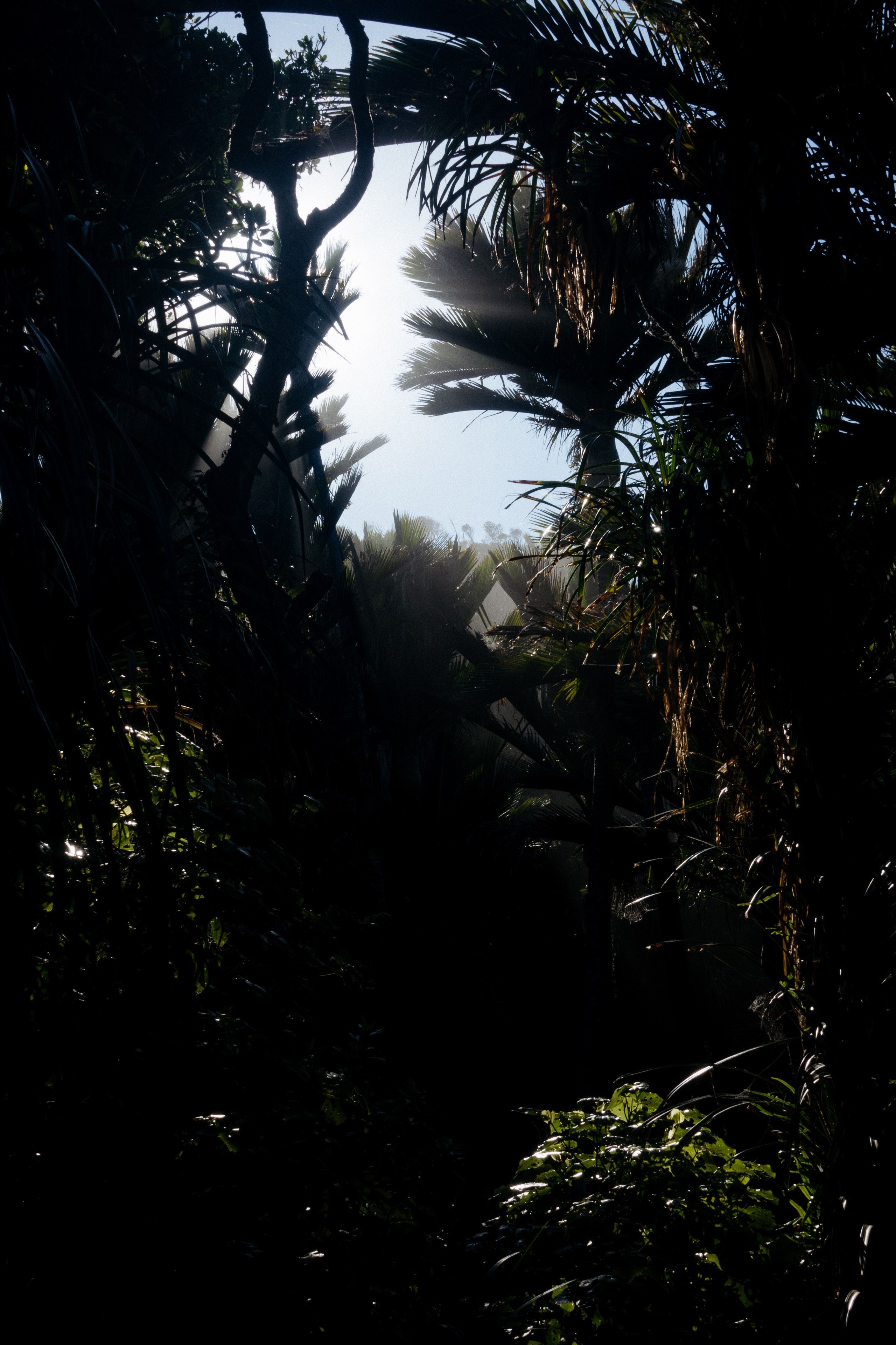 Sunlight streams through palms