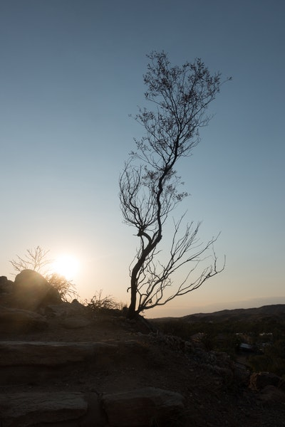 Silhoutte of branches over Anzac Hill