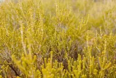Plants at Kings Canyon