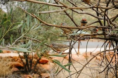 Small chirping birds