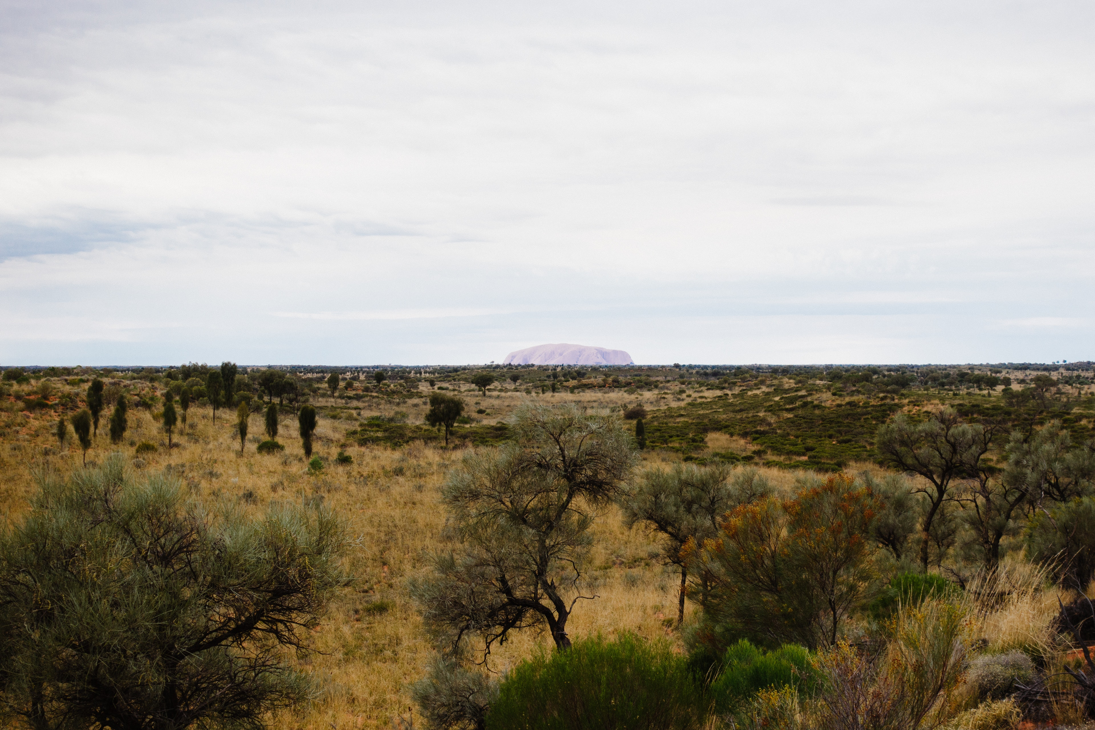 A view too Uluru from the Olgas viewing area