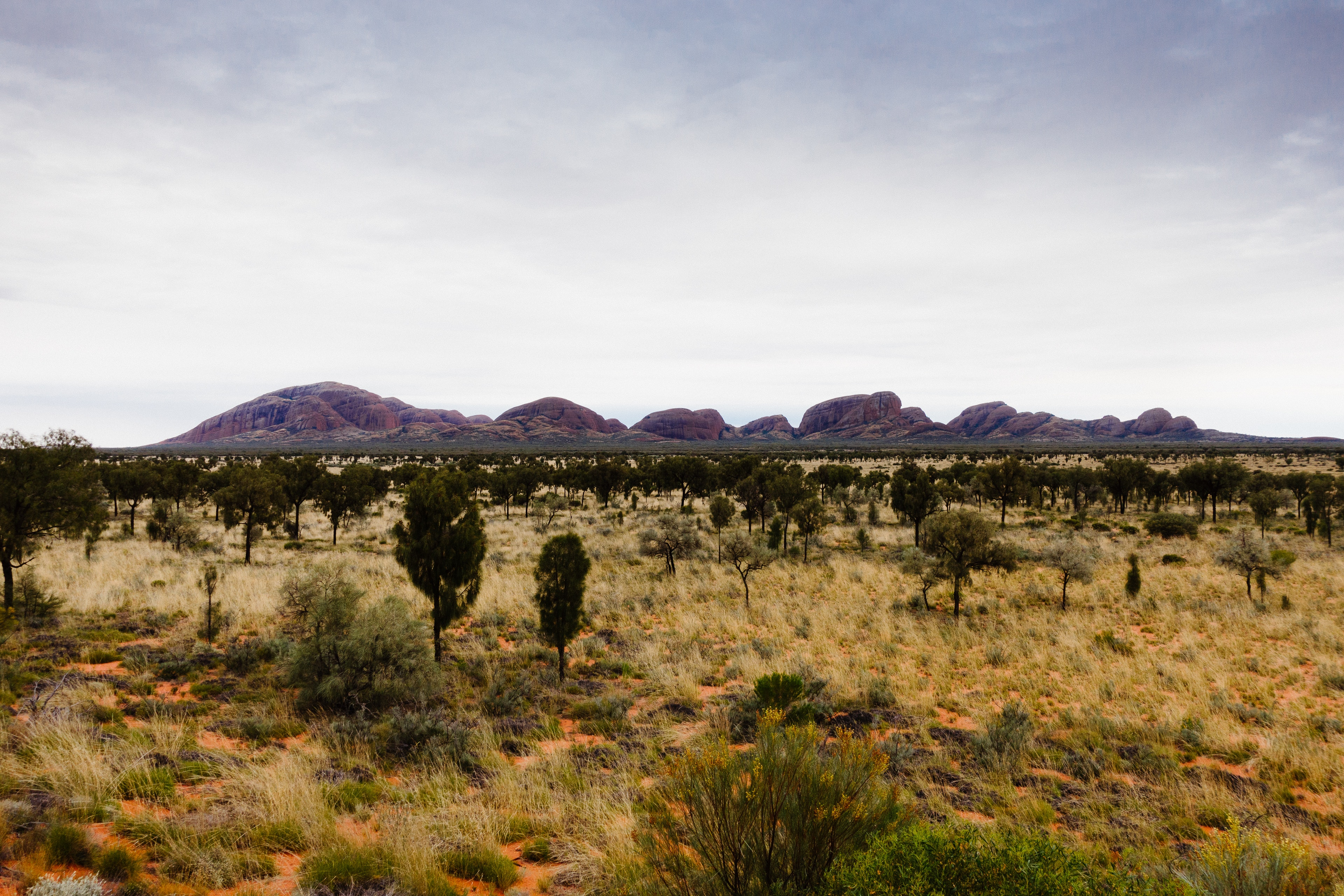 A view over to the Olgas