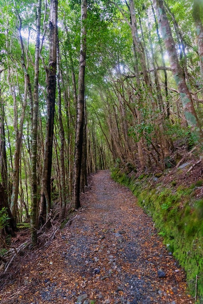 A path winds upwards through green trees, with orange beech leaves on the ground